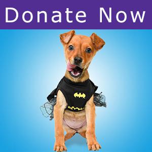 Donate to SAHS