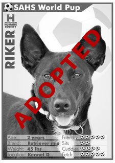 Riker - Adopted