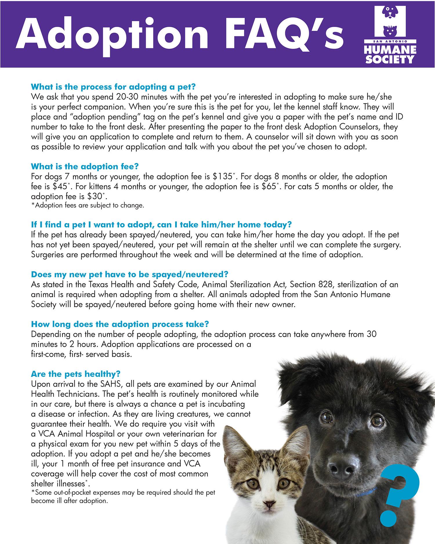 Adoption: Top Ten Cute Adopt Pet Shelter