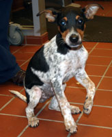 Freckles Arriving at the Humane Society of San Antonio
