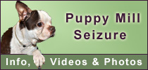 Houston Puppy Mill Seizure