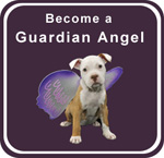 Become a Guardian Angel