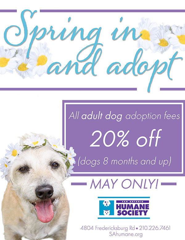 May Adoption Special web