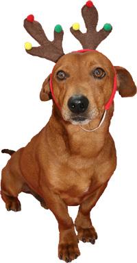 Xmas Doggy