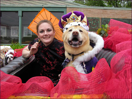 Dingo - HSSA Ruling Dogs of China Battle of Flowers Parade