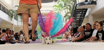 Fiesta Fidos and Fashion
