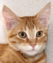 Kell - Cat Coach