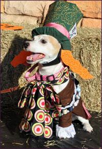 Halloween Doggy