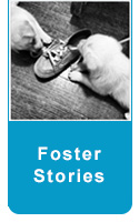 foster button stories1