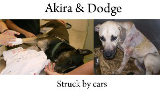 Akira and Dodge