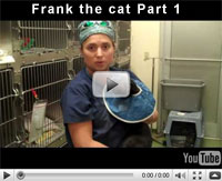 Frank the cat part 1