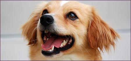 SAHS dog
