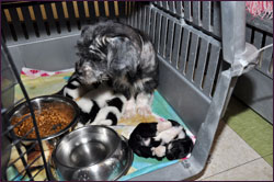 Houston Puppy Mill Rescues