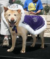 Dingo - El Rey Fido VIII